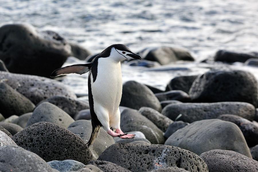 Antarktika_0076