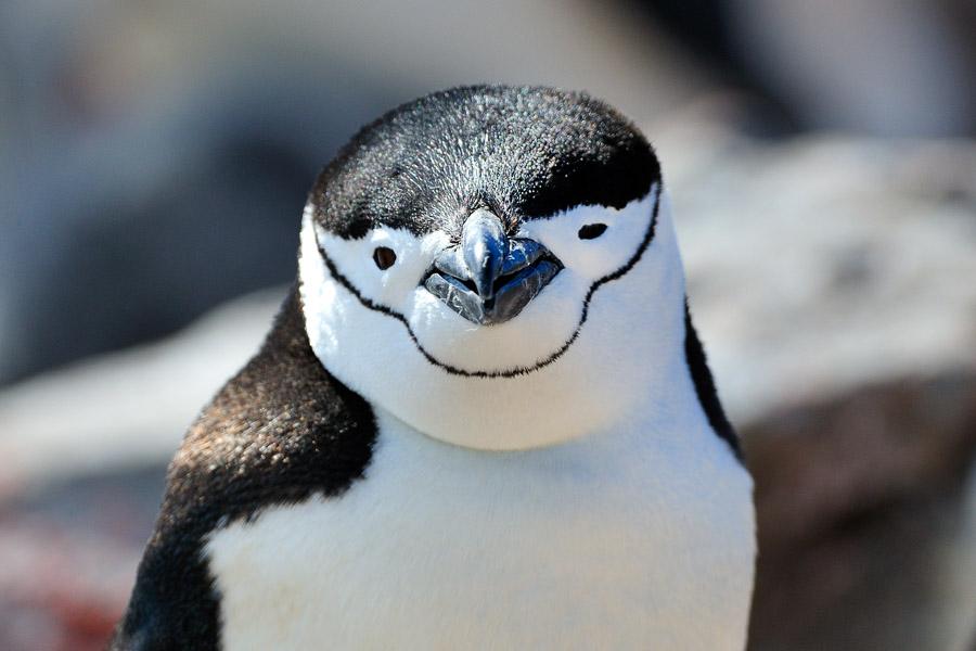 Antarktika_0116