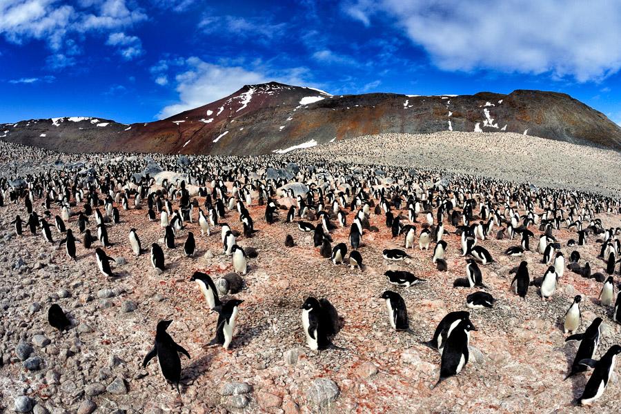 Antarktika_0316