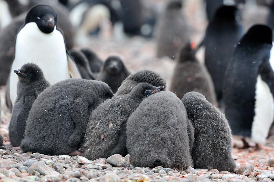 Antarktika_0427