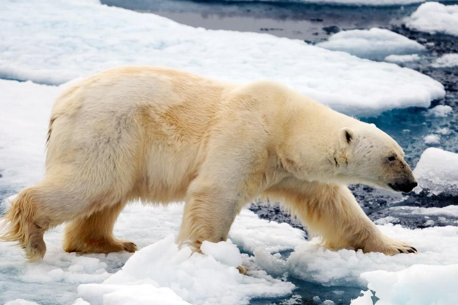 Arcticart062
