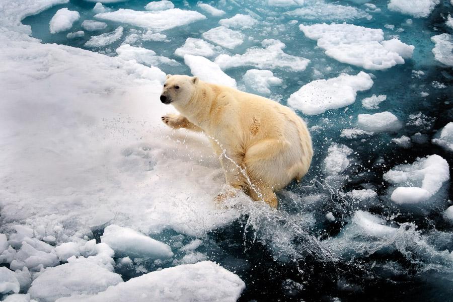 Arcticart093