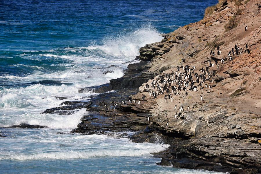 Falkland_0122