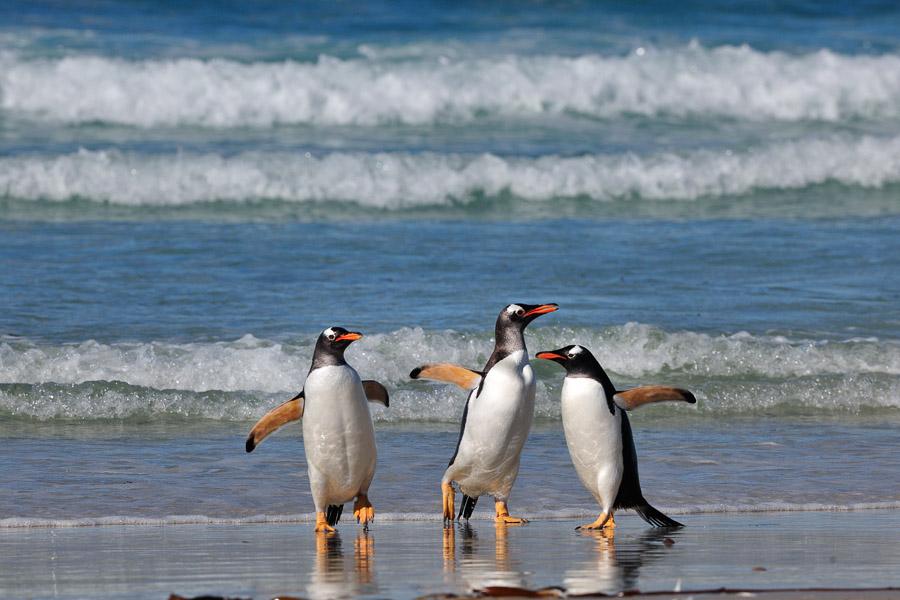 Falkland_0153