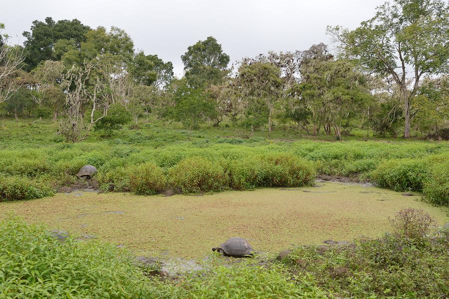 Galapagos_2013_0065