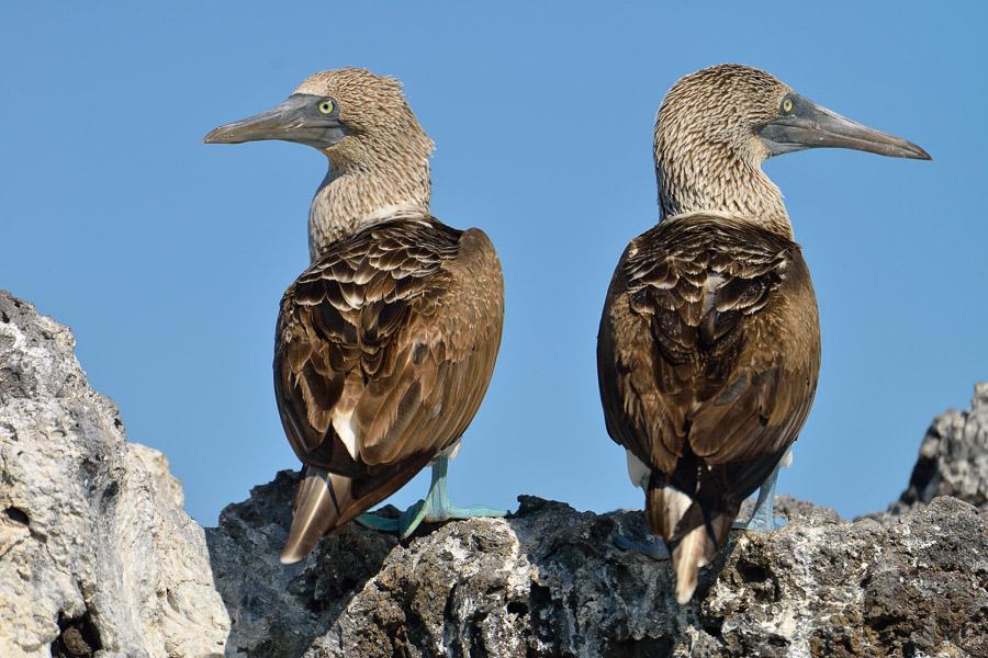 Galapagos_2013_0431