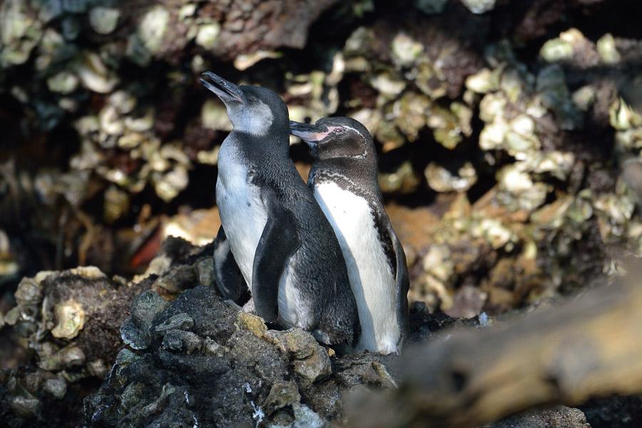 Galapagos_2013_0456