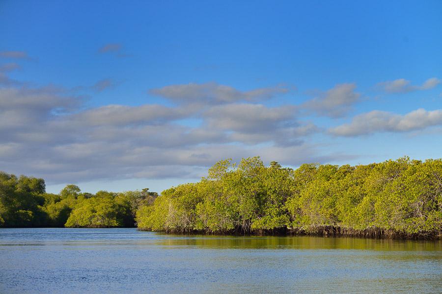 Galapagos_2013_0461