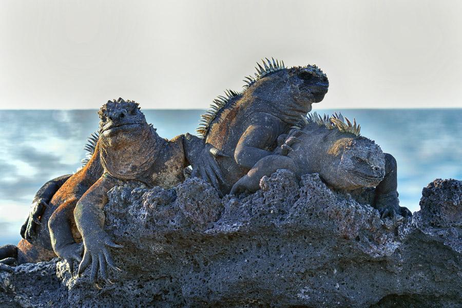 Galapagos_2013_0573