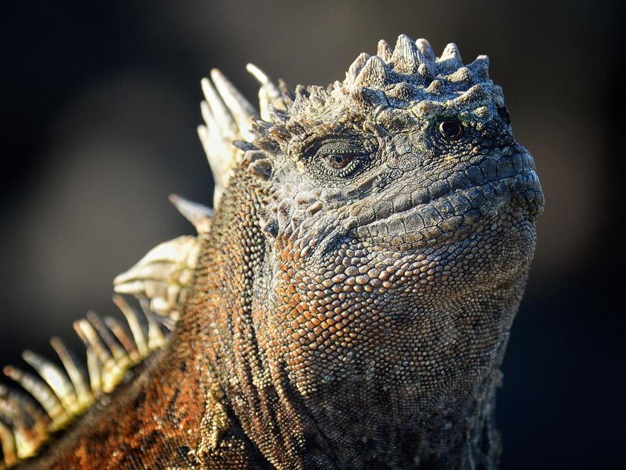 Galapagos_2013_0581b