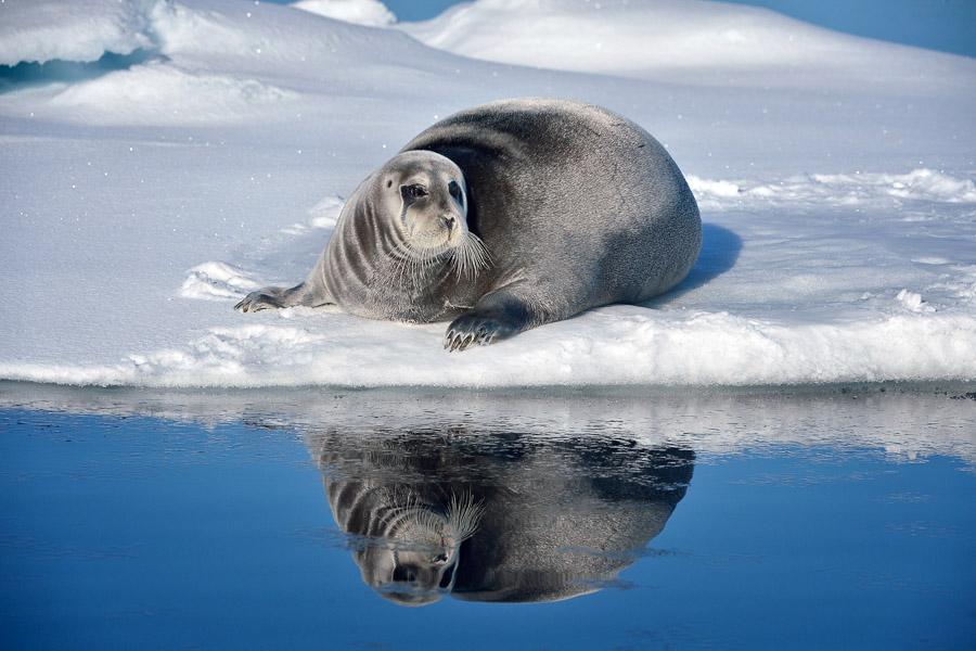 Polar-Quest-2014-0354
