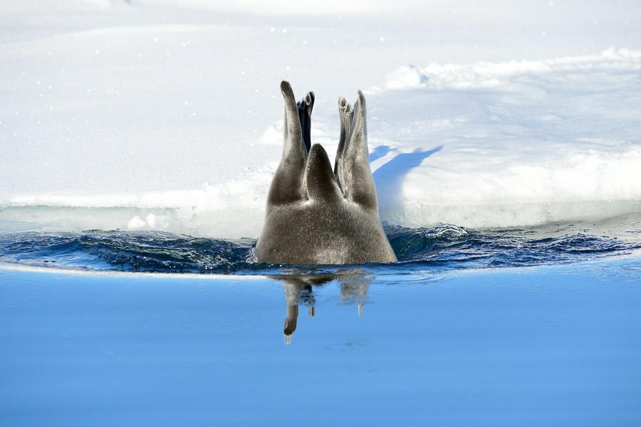 Polar-Quest-2014-0358