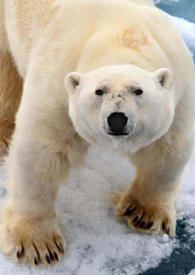 Svalbard_2008_0628b