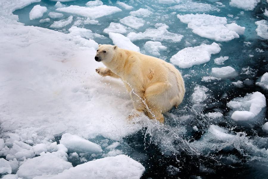 Svalbard_2008_0635