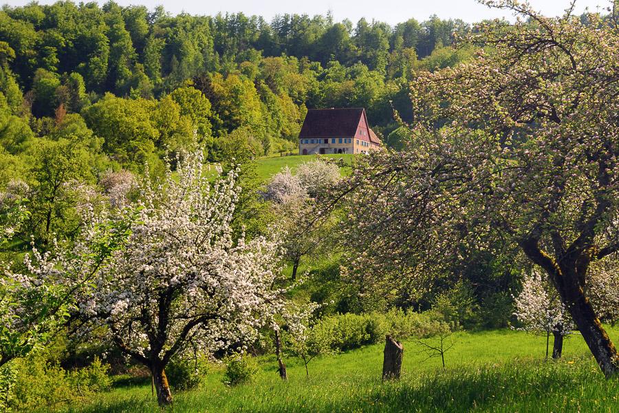 Wackershofen_05_2008_19