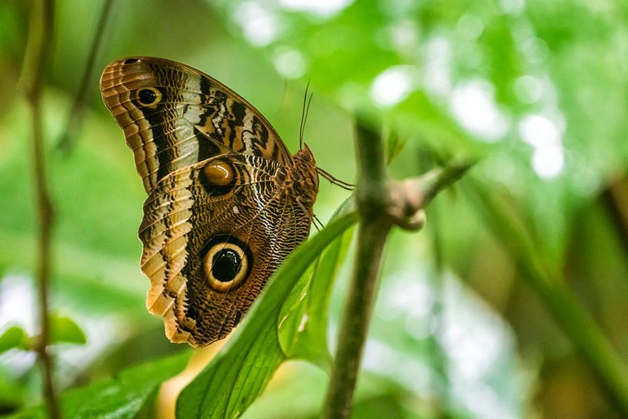 Costa-Rica_0122
