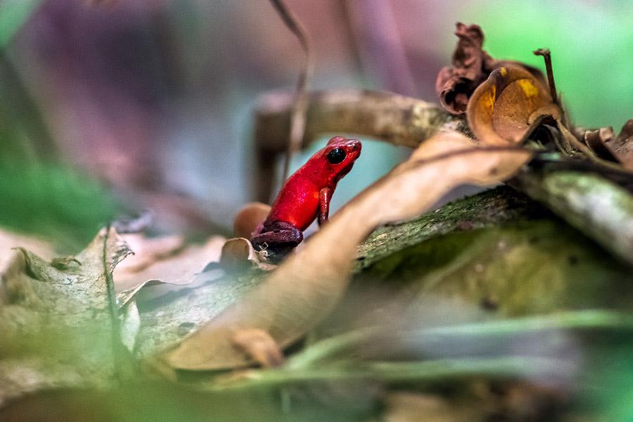 Costa-Rica_0242