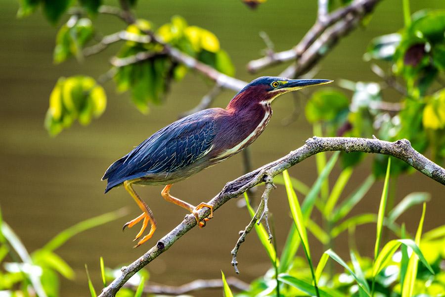 Costa-Rica_0288